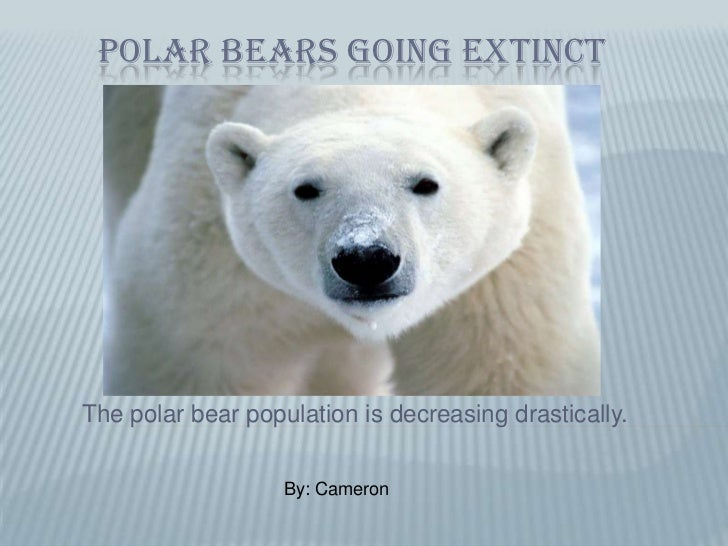 Polar bears going extinct<br />The polar bear population is decreasing drastically.<br />By: Cameron <br />
