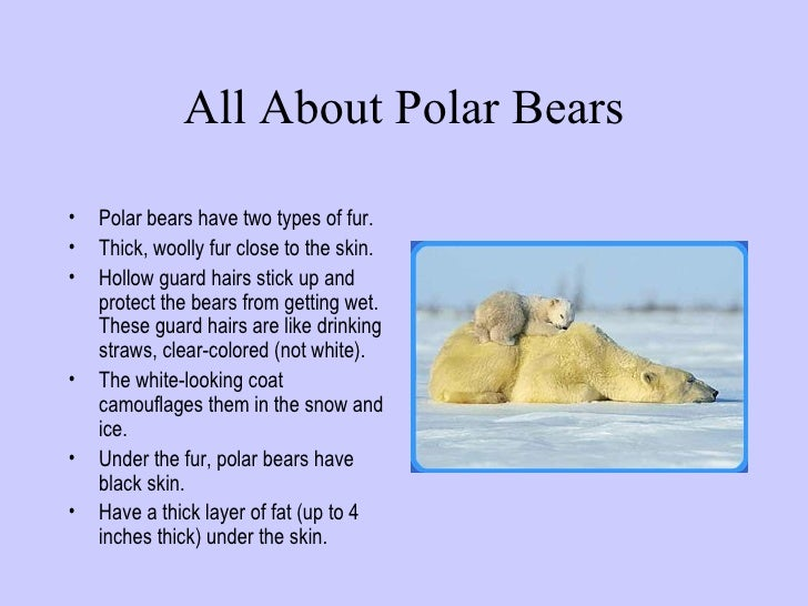 Polar Bear Facts For Kids | Amazing Facts about the World's ...