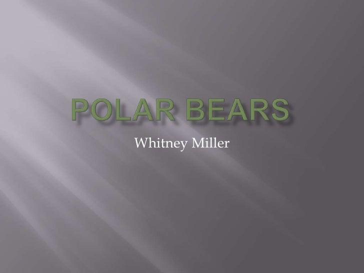 Polar Bears                                                                     <br />Whitney Miller<br />