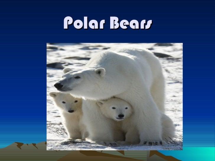 Polar bears by tanner b