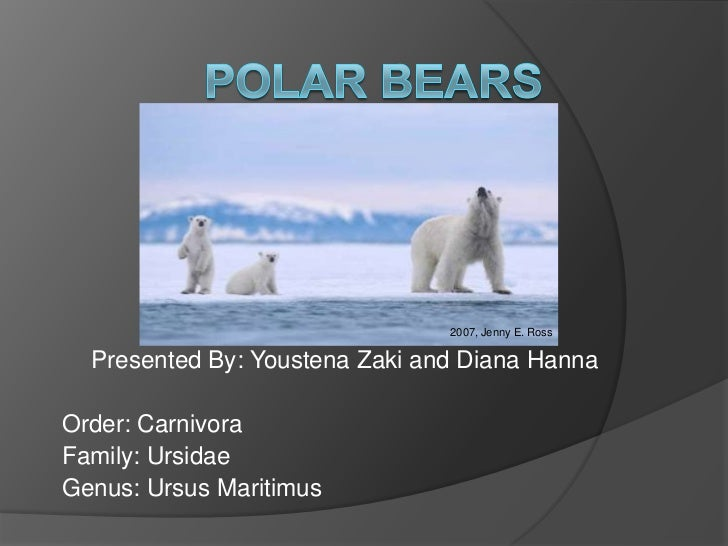 2007, Jenny E. Ross  Presented By: Youstena Zaki and Diana HannaOrder: CarnivoraFamily: UrsidaeGenus: Ursus Maritimus
