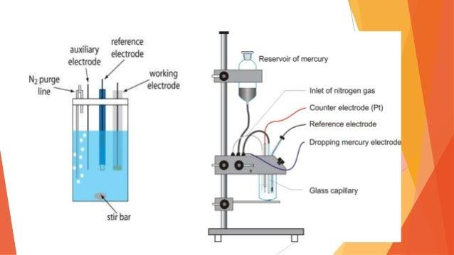 Polarographic Study of Ammonia Assimilation by Isolated ...