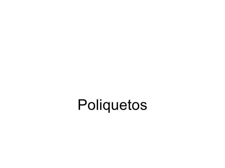 Poliquetos, polychaeta