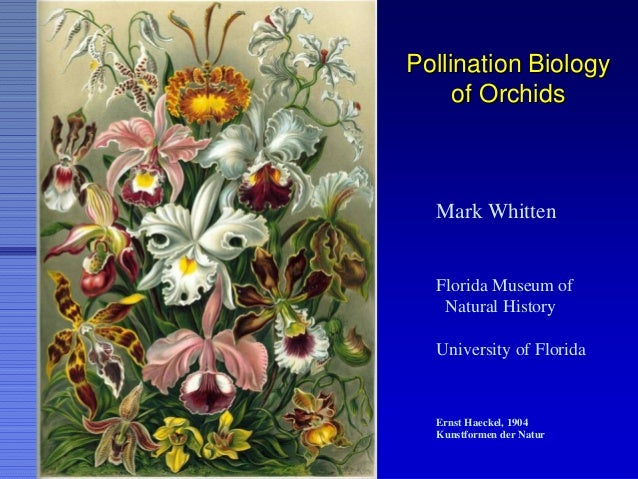 Pollination BiologyPollination Biology of Orchidsof Orchids Mark Whitten Florida Museum of Natural History University of F...