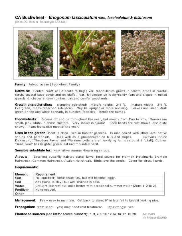 CA Buckwheat – Eriogonum fasciculatum vars. fasciculatum & foliolosum(air-ee-OG-oh-num fas-sick-yoo-LAY-tum)Family: Polygo...
