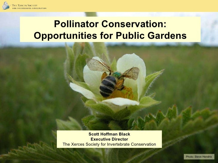 Photo:  Steve Hendrix Pollinator Conservation: Opportunities for Public Gardens Scott Hoffman Black Executive Director The...