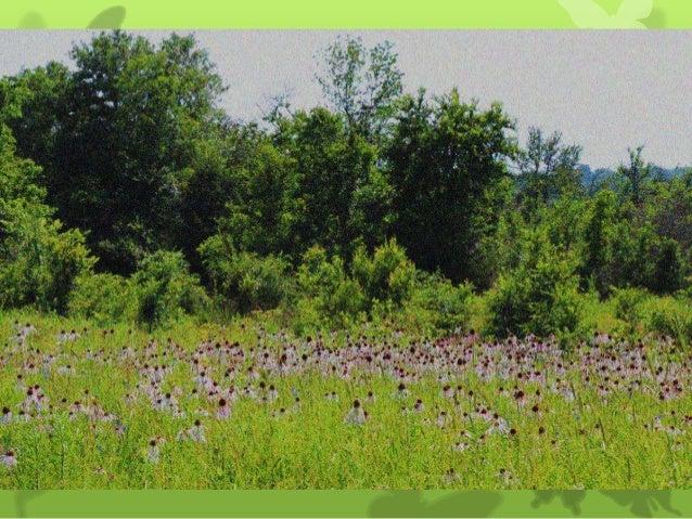 Wildflowers: Habitat for Native Pollinators on the Kerr Ranch