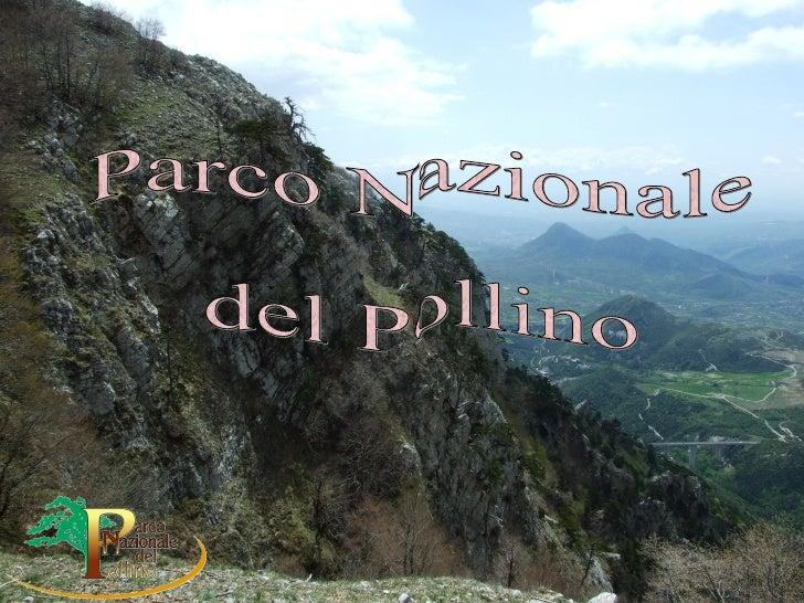 Pollino Hamed