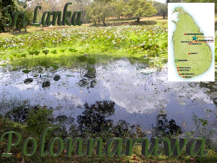 Polonnaruwa Pink Lotus