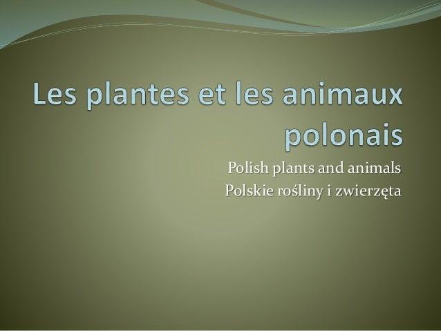 Polish plants and animals Polskie rośliny i zwierzęta