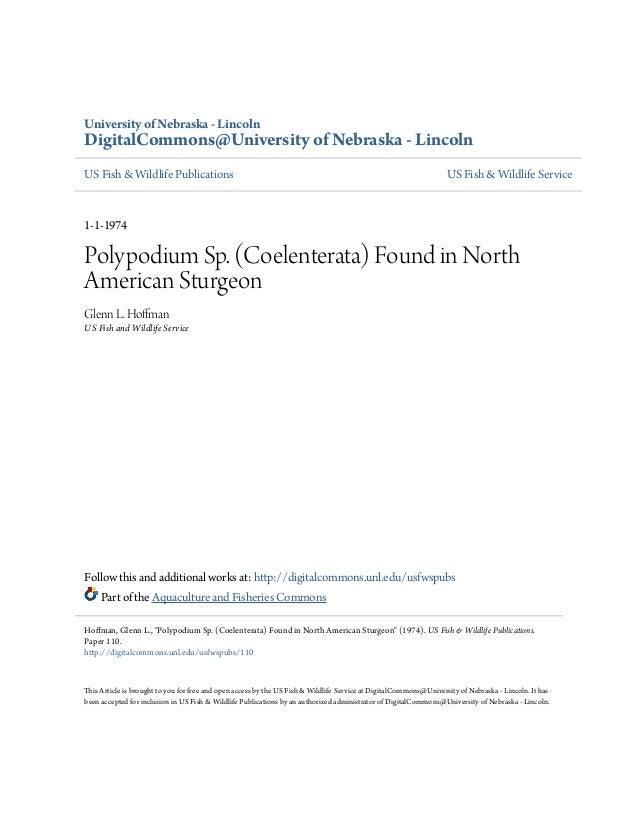 Polypodium found in north america sturgeon