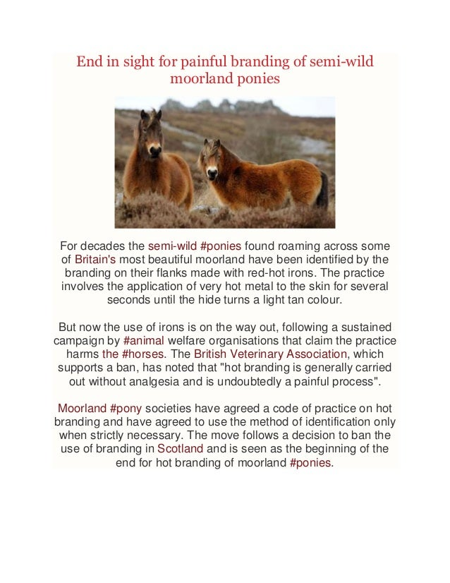 End in sight for painful branding of semi-wild moorland ponies  For decades the semi-wild #ponies found roaming across som...