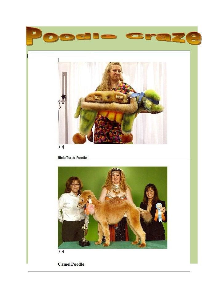 Poodle Craze
