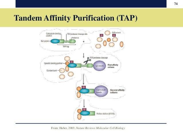 Tandem Affinity Purification - Wikiwand
