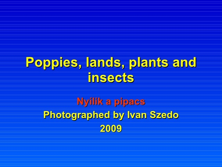 Poppies, lands, plants and insects Nyílik a pipacs Photographed by Ivan Szedo 2009