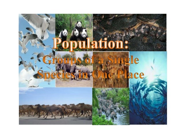POPULATION: GROUP OF SINGLE SPECIES IN ONE PLACE