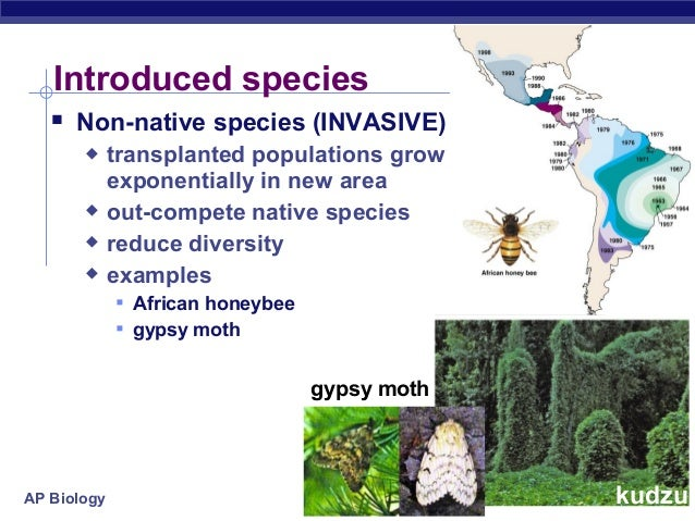 Invasive Species On Long Island Ny