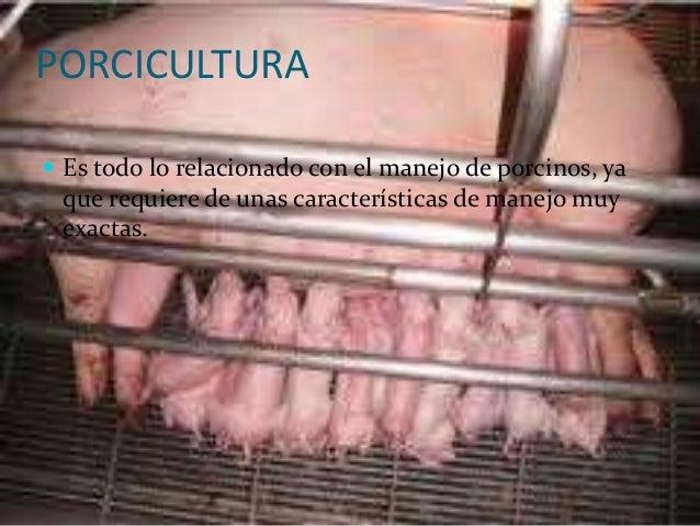 PORCICULTURA Es todo lo relacionado con el manejo de porcinos, ya que requiere de unas características de manejo muy exac...