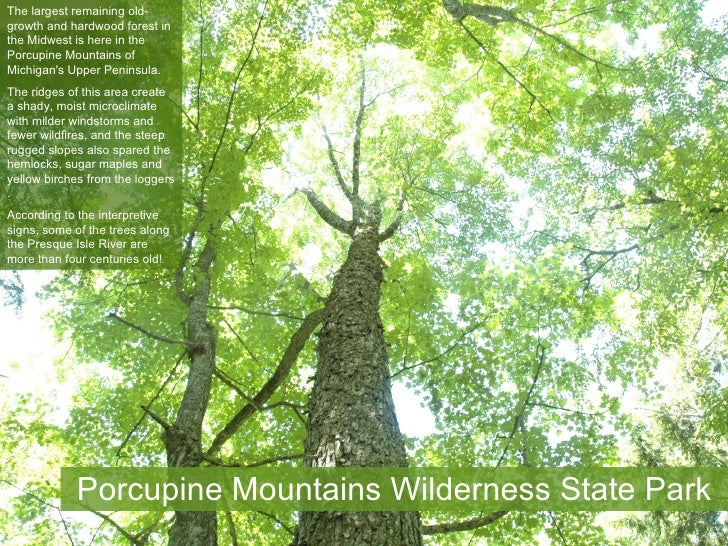 The largest remaining old- growth and hardwood forest in the Midwest is here in the Porcupine Mountains of Michigan's Uppe...