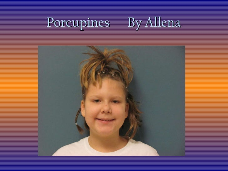 Porcupines  By Allena