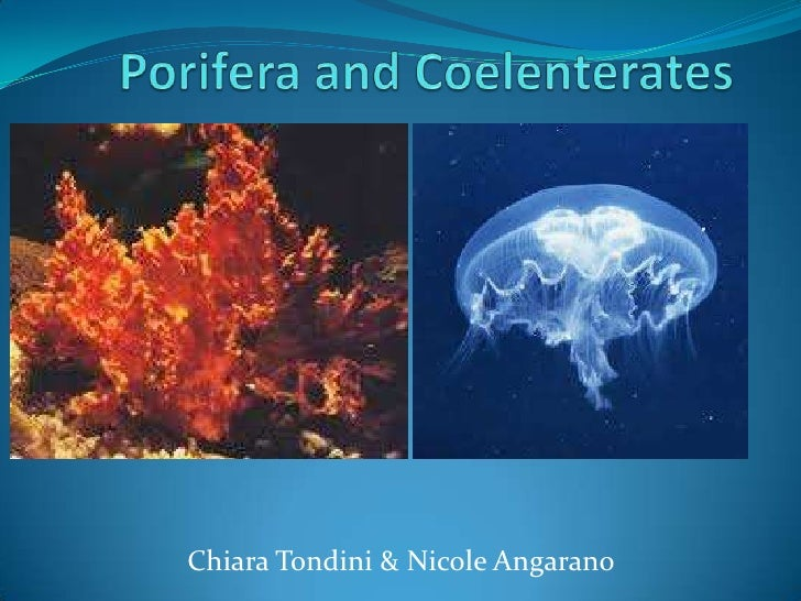 Porifera and coelenterates