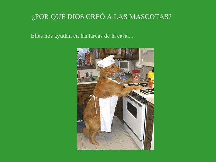 ¿POR QUÉ DIOS CREÓ A LAS MASCOTAS? Ellas nos ayudan en las tareas de la casa....
