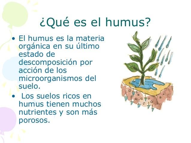 Por qu es importante cuidar el suelo 2 for A que se denomina suelo