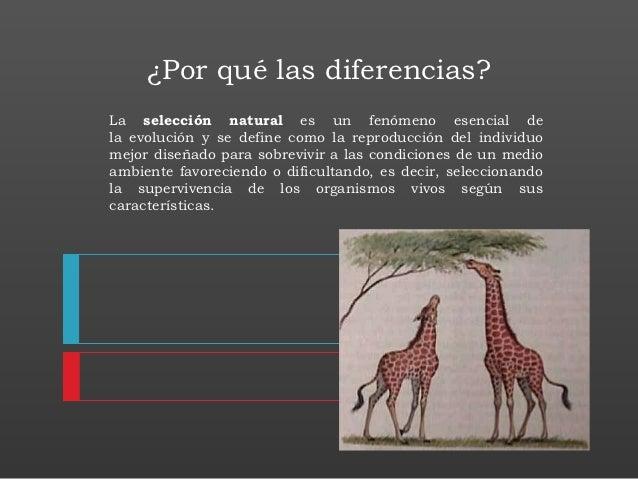 ¿Por qué las diferencias?La selección natural es un fenómeno esencial dela evolución y se define como la reproducción del ...