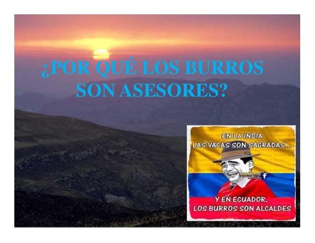 ¿POR QUÉ LOS BURROS SON ASESORES?  Moises Logroño G.  1