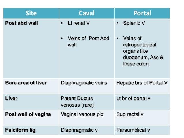 Hepatic portal vein and portocaval anatomosis for Hepatic portal v