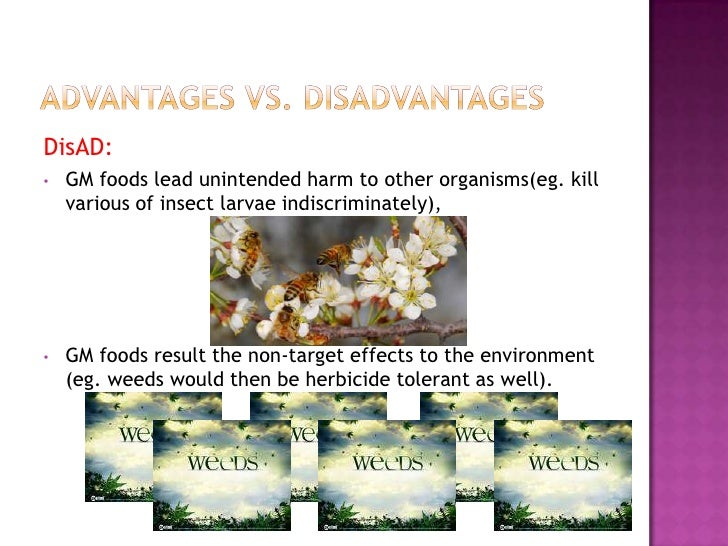 positive and negative impact of genetically modified food 2 essay Genetically modified organisms good, or not  and genetically modified food is one solution  but these suspects are also not positive.