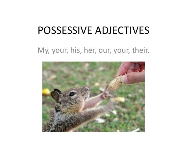 POSSESSIVE ADJECTIVES My, your, his, her, our, your, their.