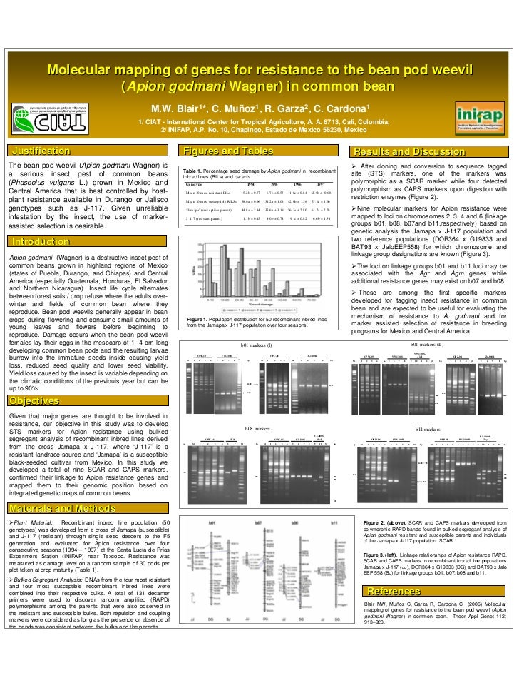 Molecular mapping of genes for resistance to the bean pod weevil                           (Apion godmani Wagner) in commo...