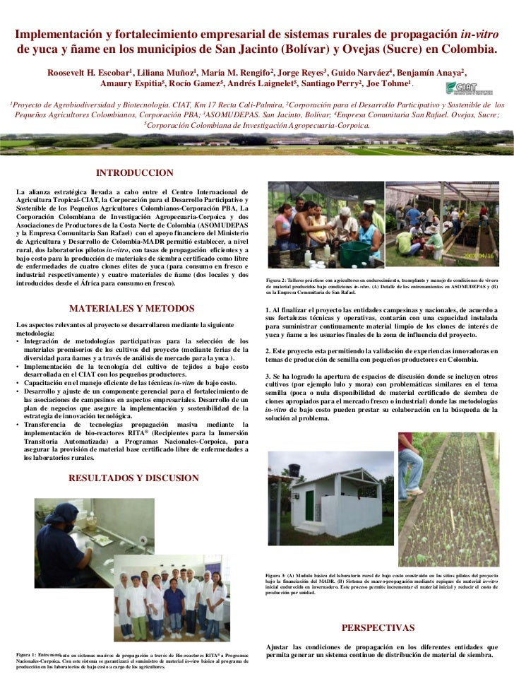 Poster65: Implementacion y fortalecimiento empresarial de sistemas rurales de propagacion in-vitro de yuca y name en los municipios de San Jacinto (Bolivar) y Ovejas (Sucre en Colombia)