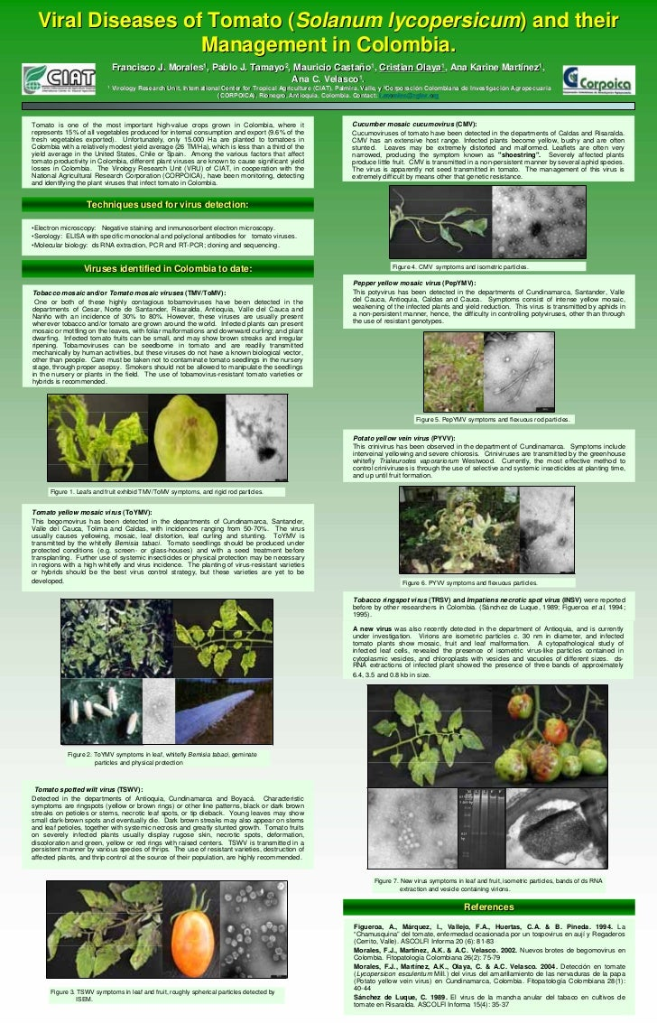 Viral Diseases of Tomato (Solanum lycopersicum) and their                    Management in Colombia.                      ...