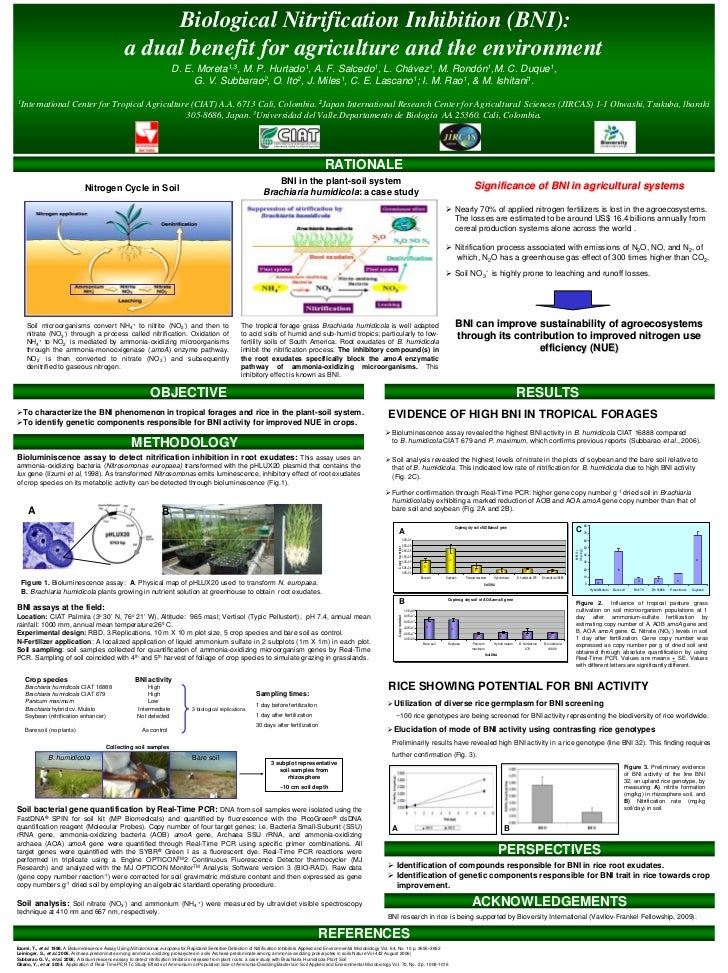 Biological Nitrification Inhibition (BNI):                                                    a dual benefit for agricultu...