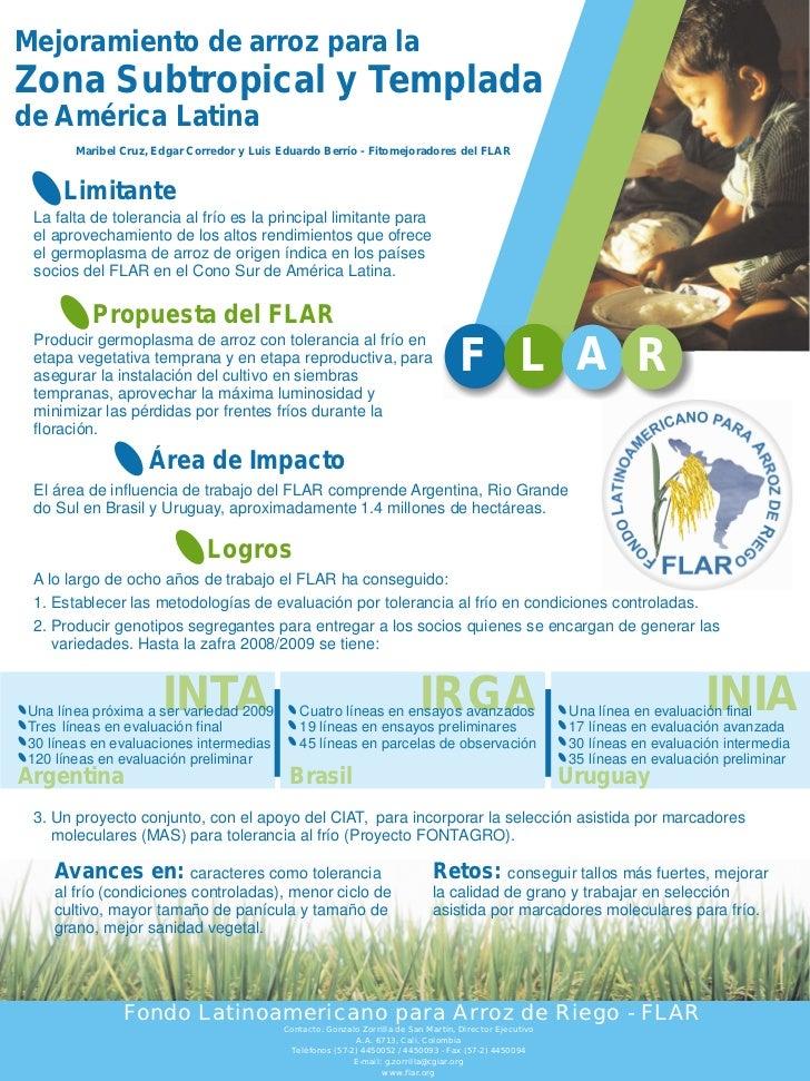 Poster86: Mejoramiento de arroz para la Zona Subtropical y templada de América Latina