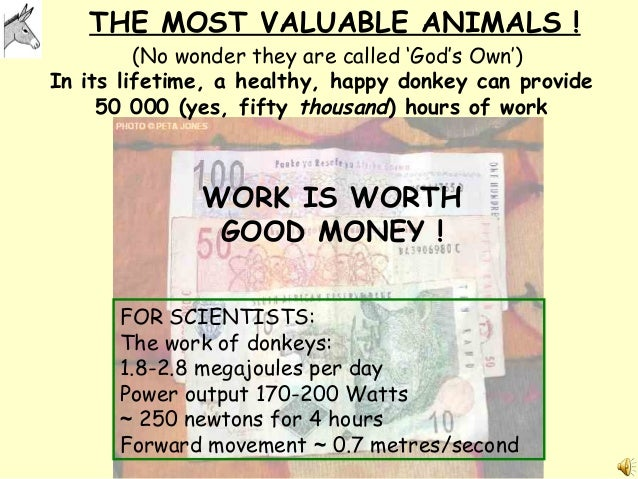 THE MOST VALUABLE ANIMALS ! WORK IS WORTH GOOD MONEY ! FOR SCIENTISTS: The work of donkeys: 1.8-2.8 megajoules per day Pow...