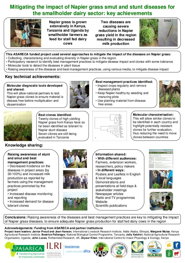Mitigating the impact of Napier grass smut and stunt diseases for              the smallholder dairy sector: key achieveme...