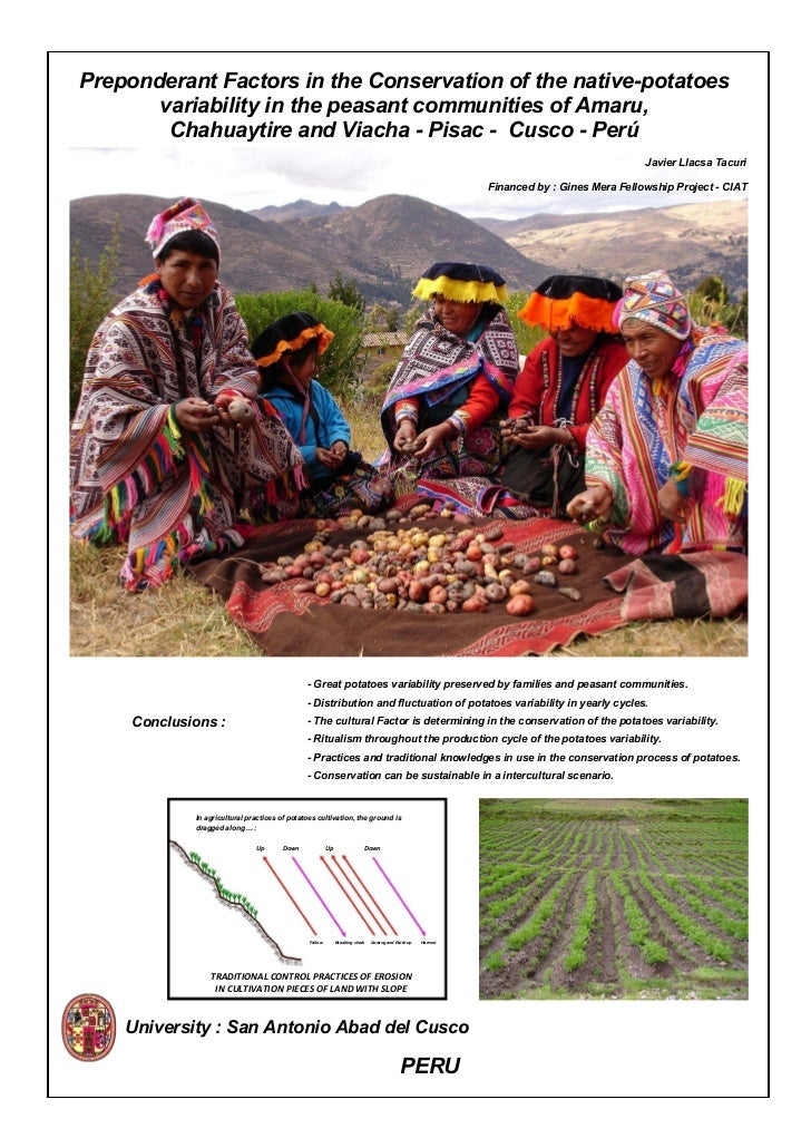 Preponderant Factors in the Conservation of the native-potatoes        variability in the peasant communities of Amaru,   ...