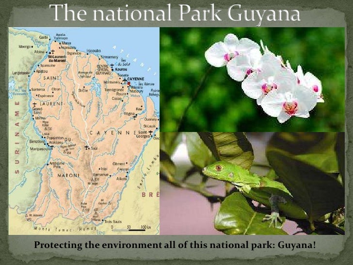 The national Park Guyana<br />Protecting the environment all of this national park: Guyana!<br />