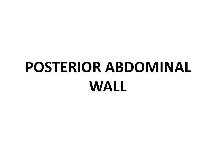 POSTERIOR ABDOMINAL WALL<br />