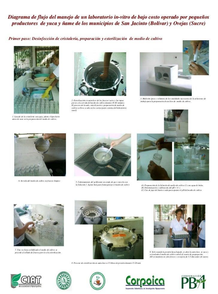 Diagrama de flujo del manejo de un laboratorio in-vitro de bajo costo operado por pequeños  productores de yuca y ñame de ...