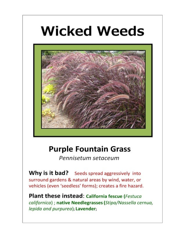 'Wicked Weeds' Posters   2014