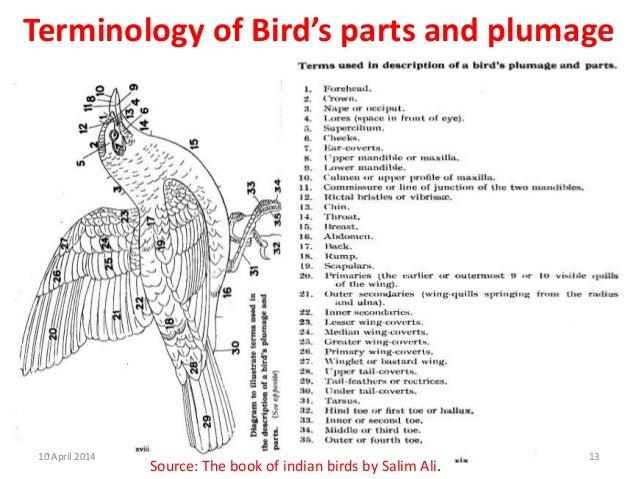 Book Parts Terminology Terminology of Bird's Parts