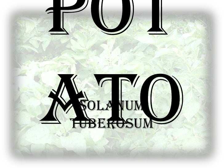 Potato<br />SolanumTuberosum<br />