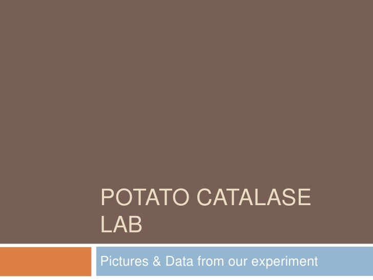 Potato Catalase Lab<br />Pictures & Data from our experiment<br />