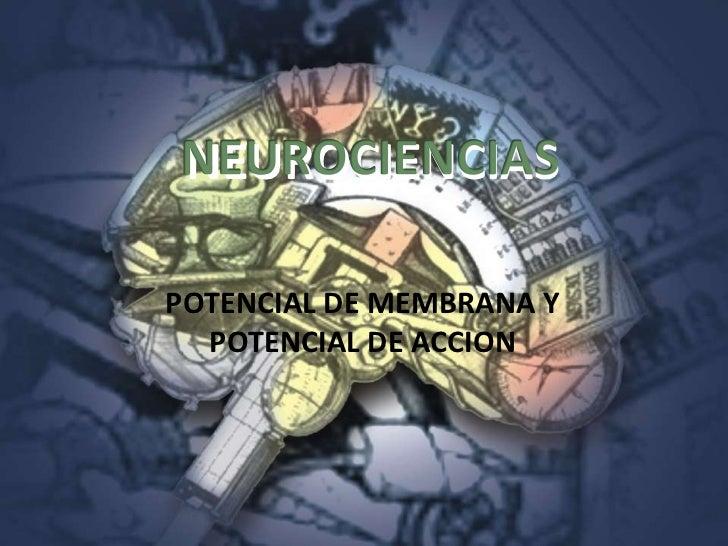 NEUROCIENCIAS  POTENCIAL DE MEMBRANA Y   POTENCIAL DE ACCION