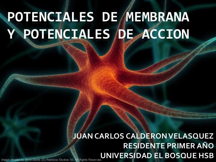 POTENCIALES DE MEMBRANAY POTENCIALES DE ACCION        JUAN CARLOS CALDERON VELASQUEZ                   RESIDENTE PRIMER AÑ...