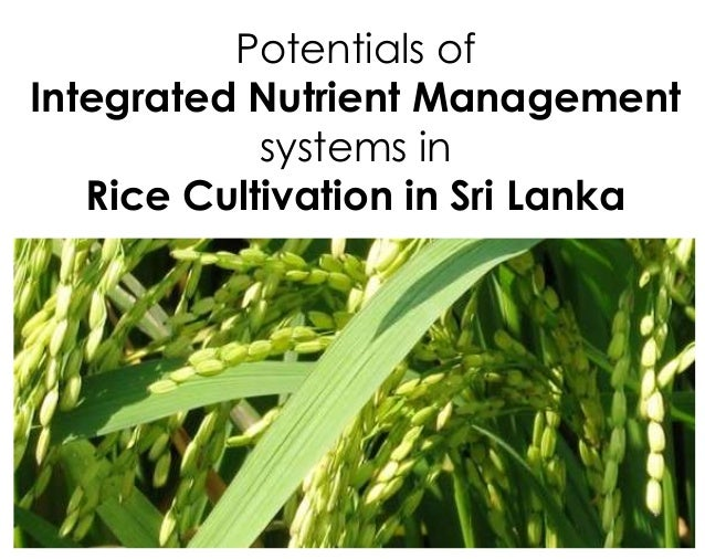 Potentials ofIntegrated Nutrient Managementsystems inRice Cultivation in Sri Lanka